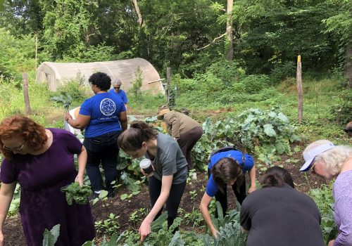 Students and staff working in UNC Asheville's ROOTS Garden