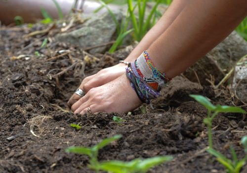 Hands in dirt at UNC Asheville's ROOTS student garden